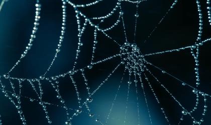 Ode às aranhas
